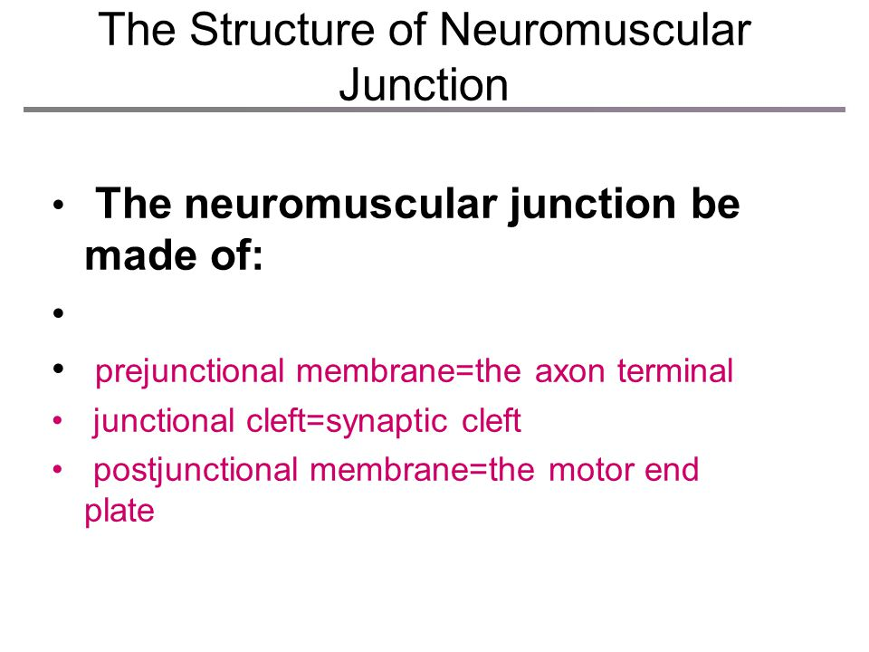 The Structure of Neuromuscular Junction
