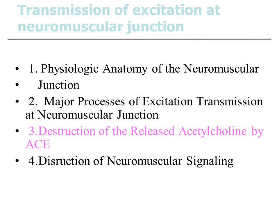 Transmission of excitation at neuromuscular junction