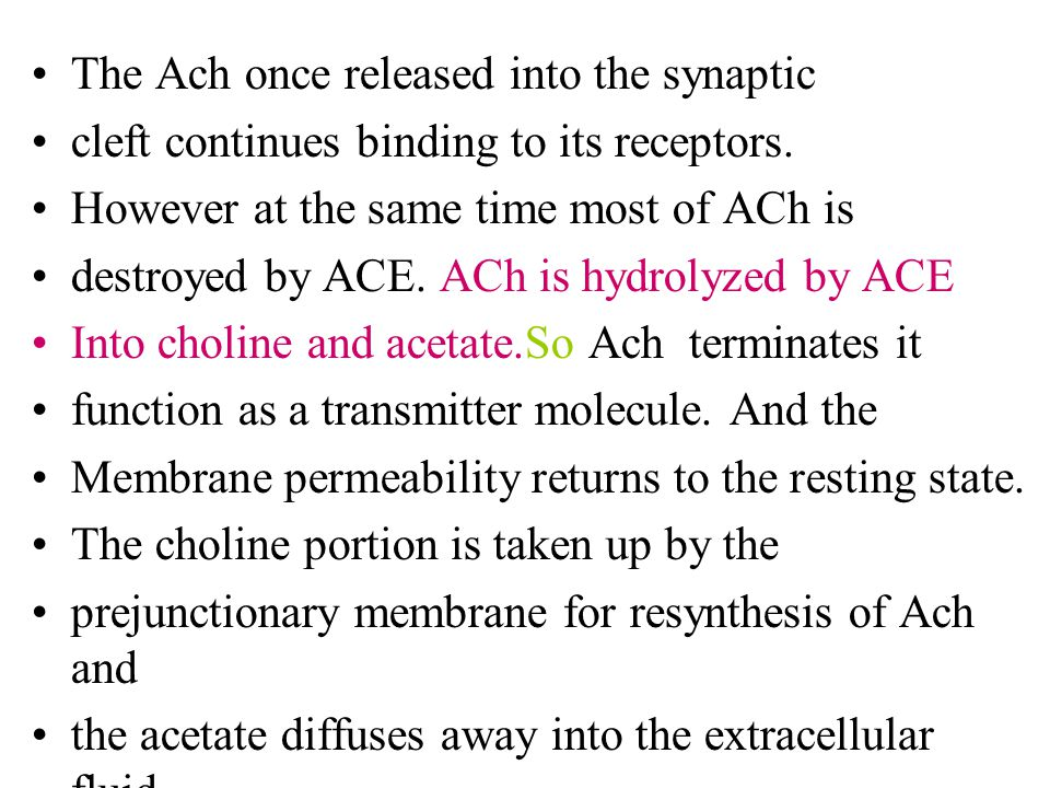 The Ach once released into the synaptic