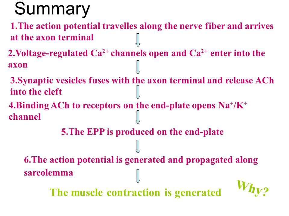 Summary Why The muscle contraction is generated