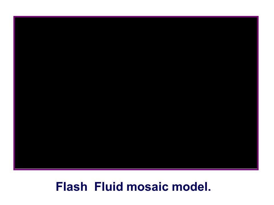 Flash Fluid mosaic model.