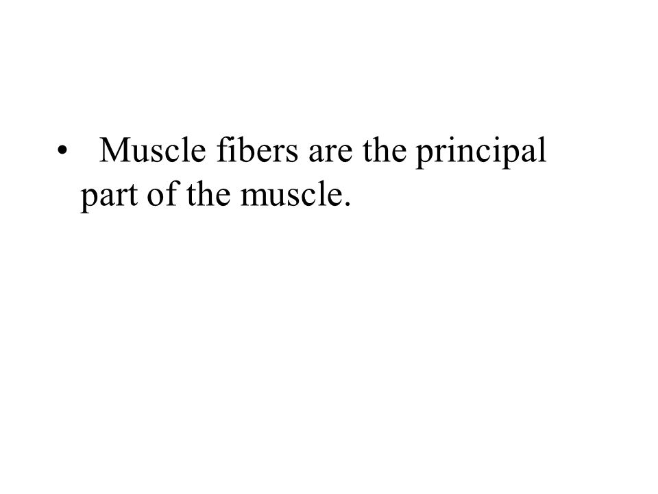 Muscle fibers are the principal part of the muscle.
