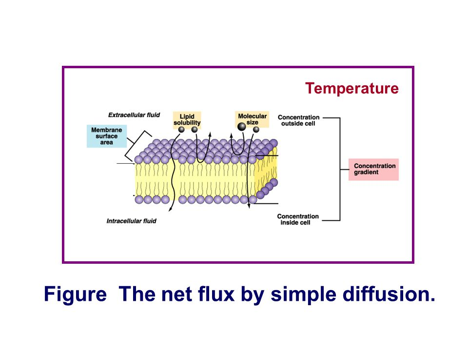 Figure The net flux by simple diffusion.
