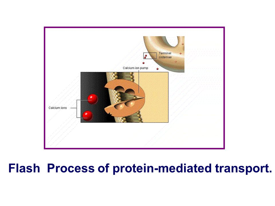 Flash Process of protein-mediated transport.