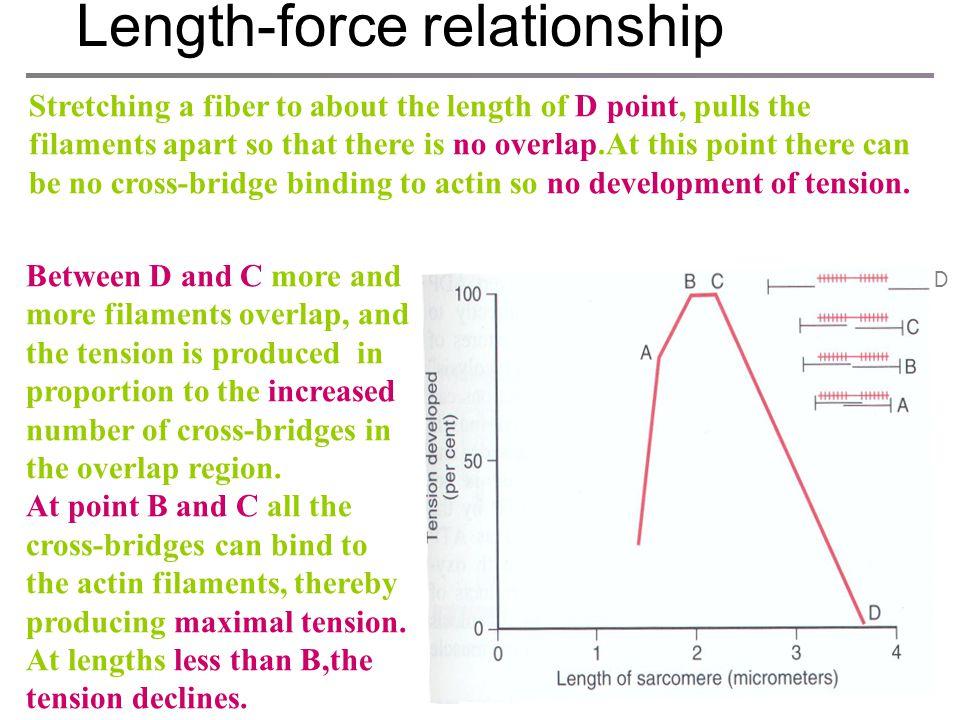 Length-force relationship