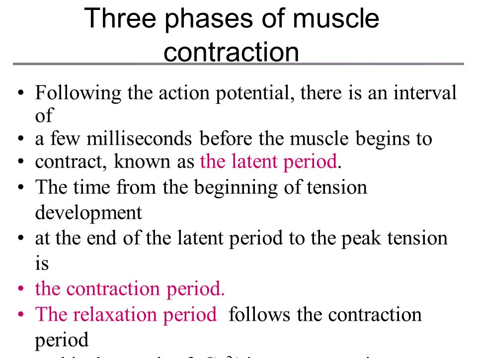 Three phases of muscle contraction