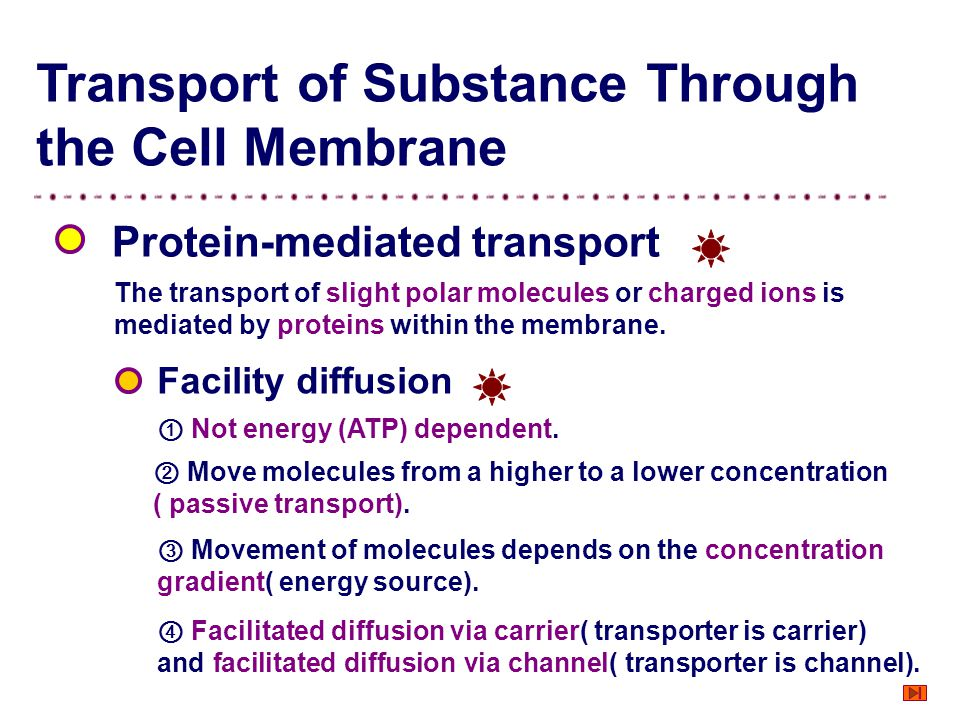 Transport of Substance Through the Cell Membrane