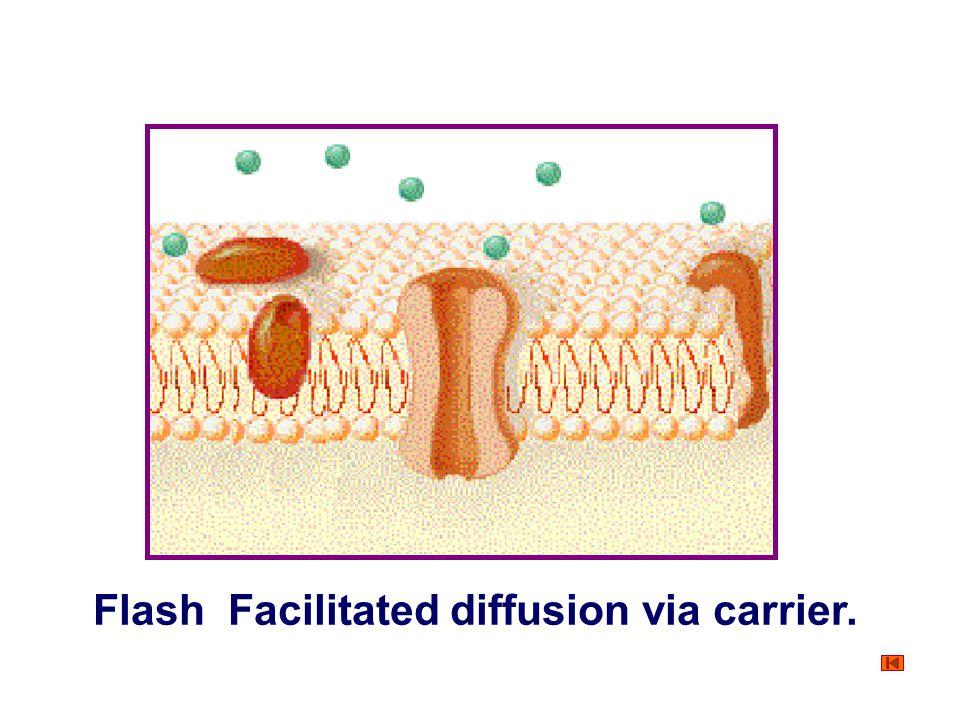 Flash Facilitated diffusion via carrier.