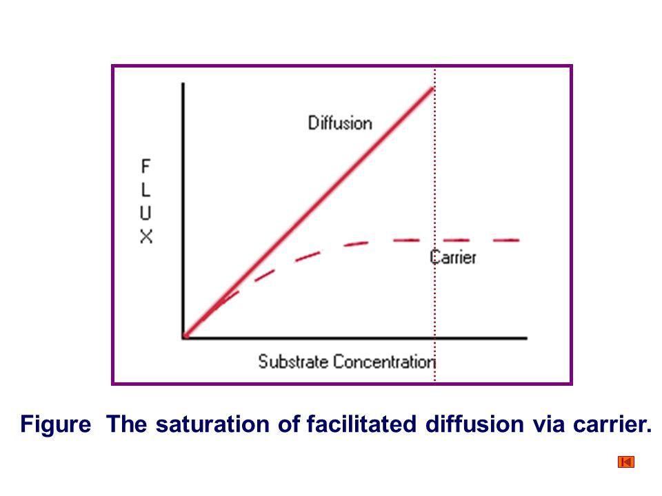 Figure The saturation of facilitated diffusion via carrier.