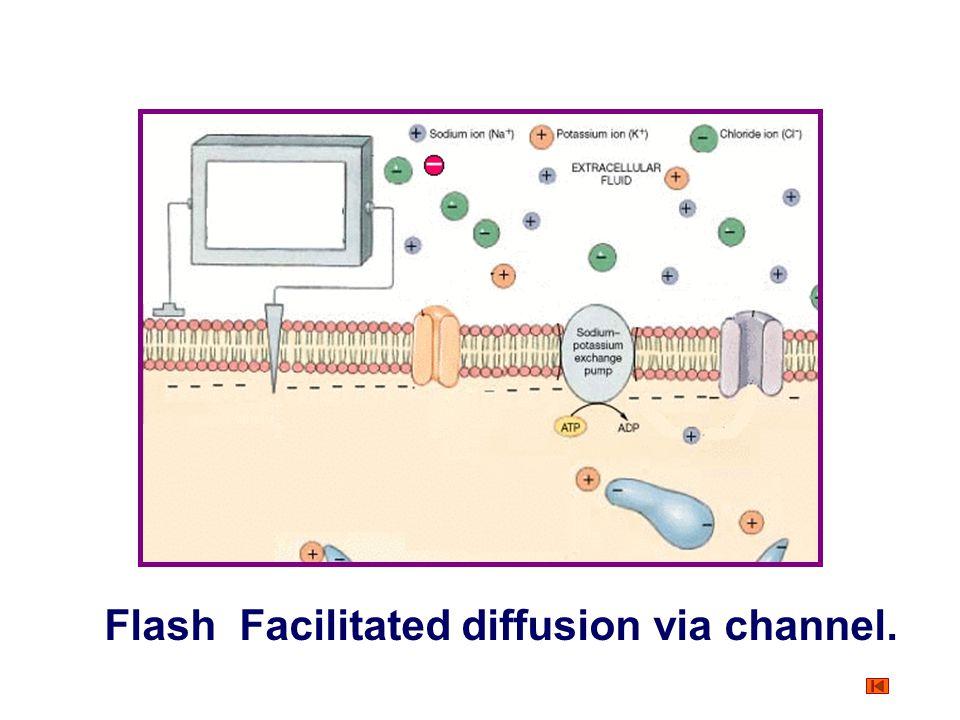 Flash Facilitated diffusion via channel.