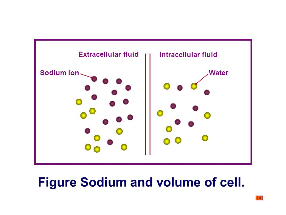 Figure Sodium and volume of cell.