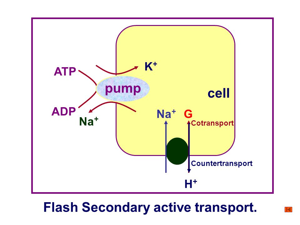 Flash Secondary active transport.