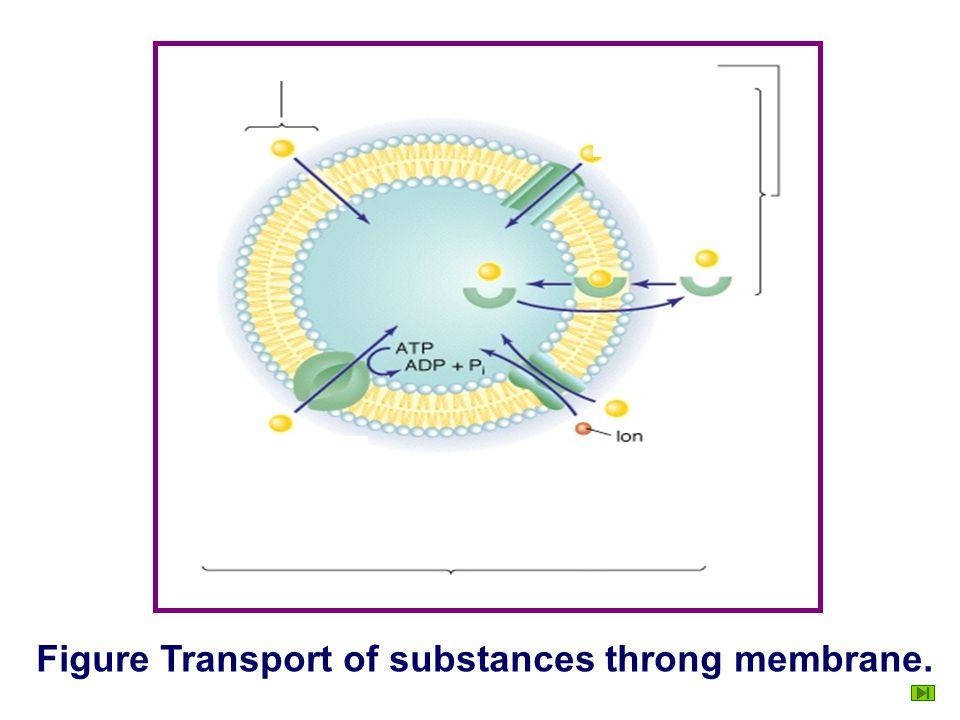 Figure Transport of substances throng membrane.