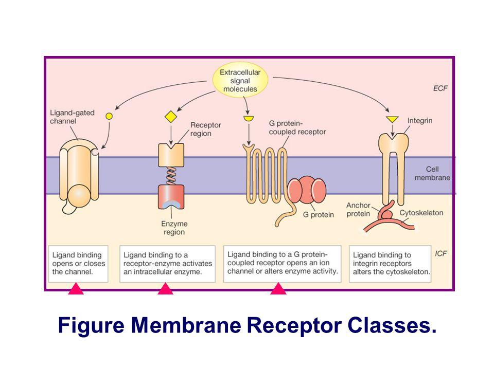 Figure Membrane Receptor Classes.