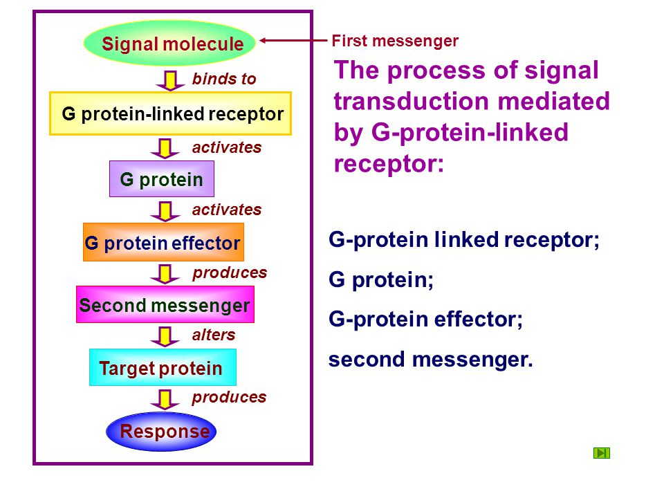 Response produces. Signal molecule. First messenger. The process of signal transduction mediated by G-protein-linked receptor: