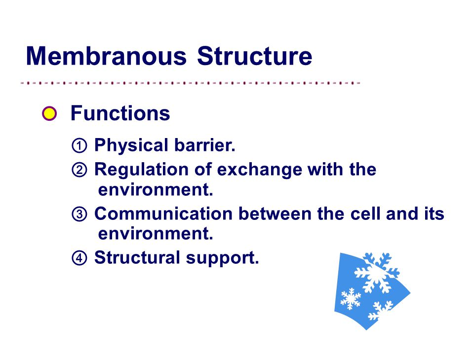 Membranous Structure Functions ① Physical barrier.