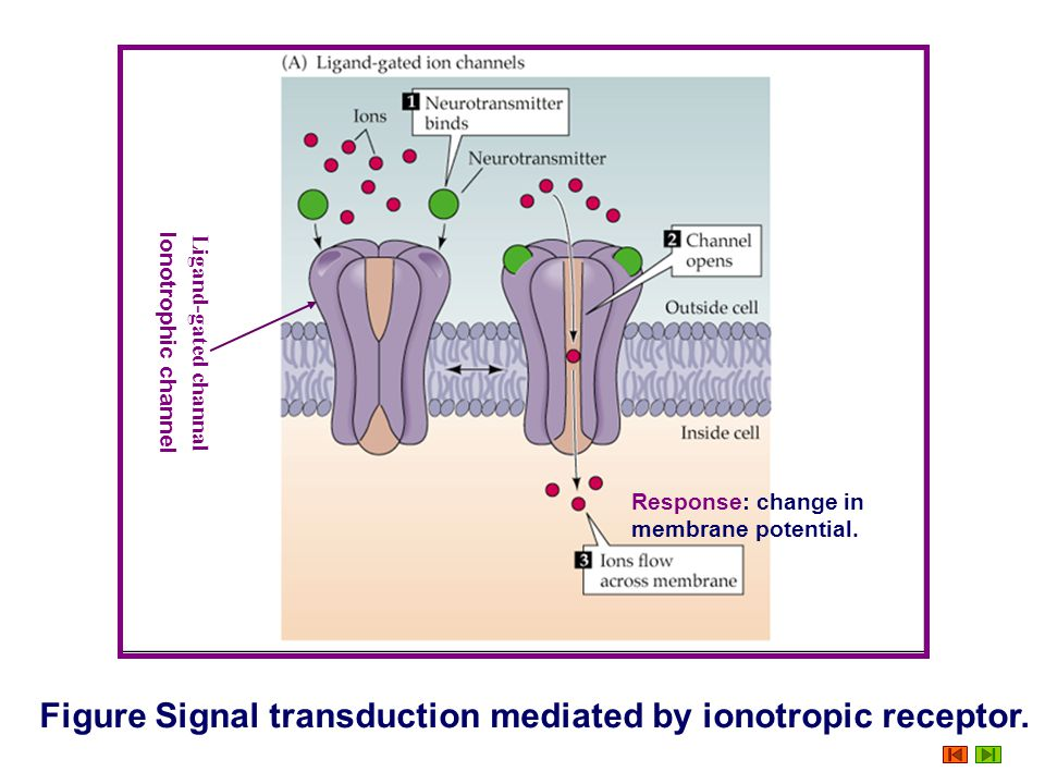 Figure Signal transduction mediated by ionotropic receptor.