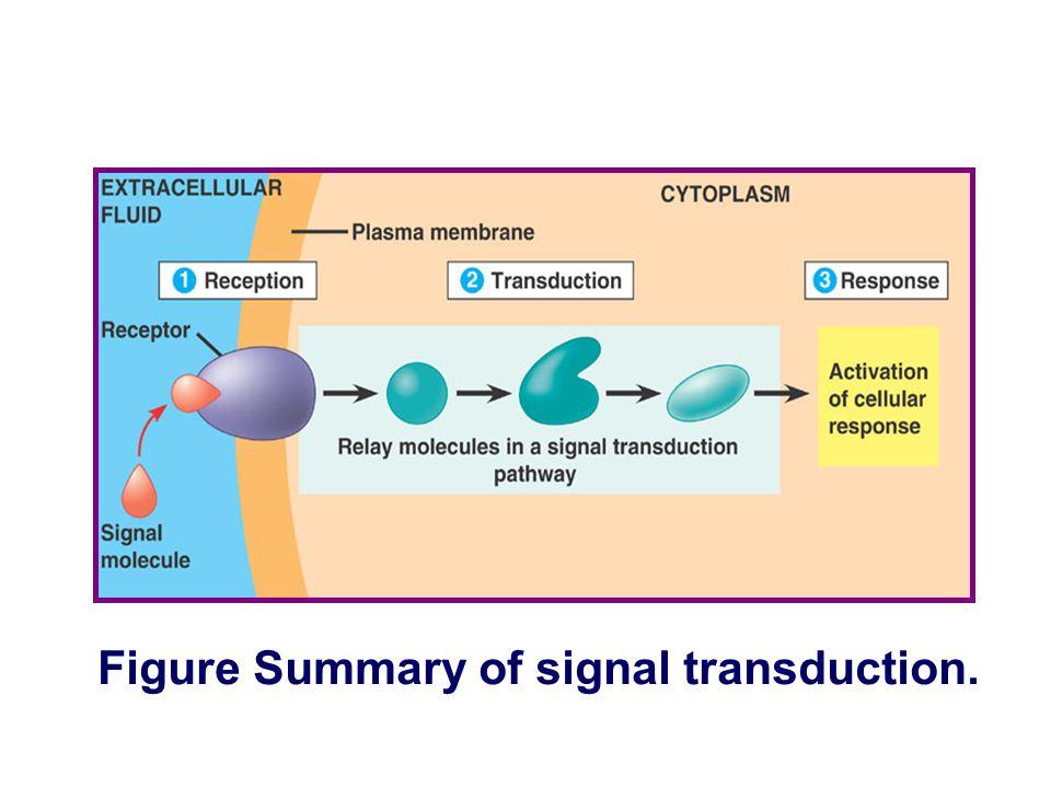 Figure Summary of signal transduction.
