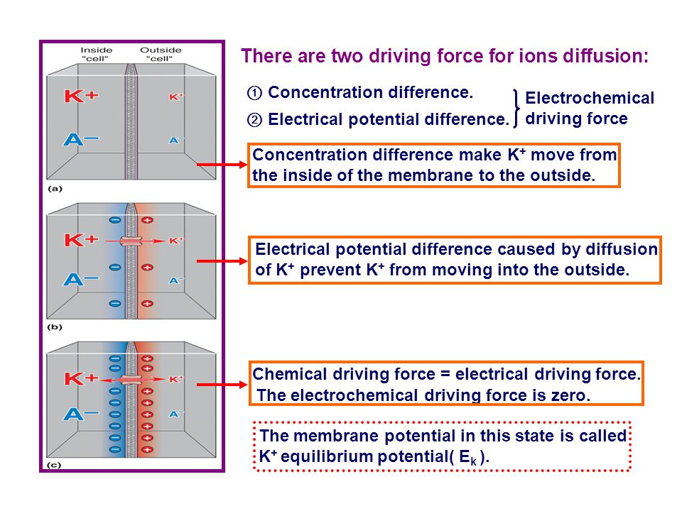 There are two driving force for ions diffusion: