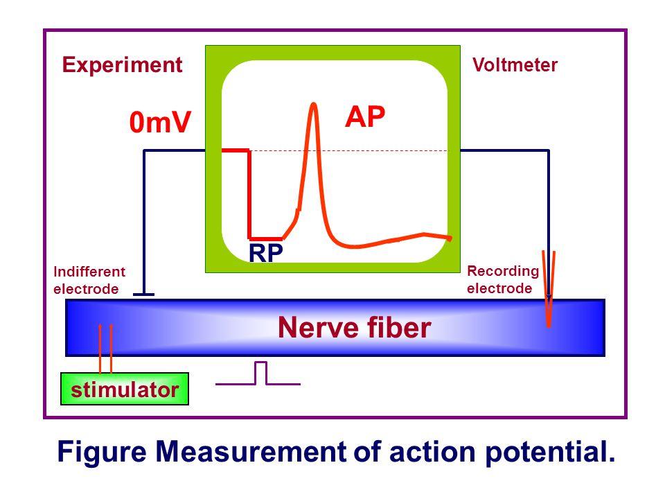 Figure Measurement of action potential. AP 0mV