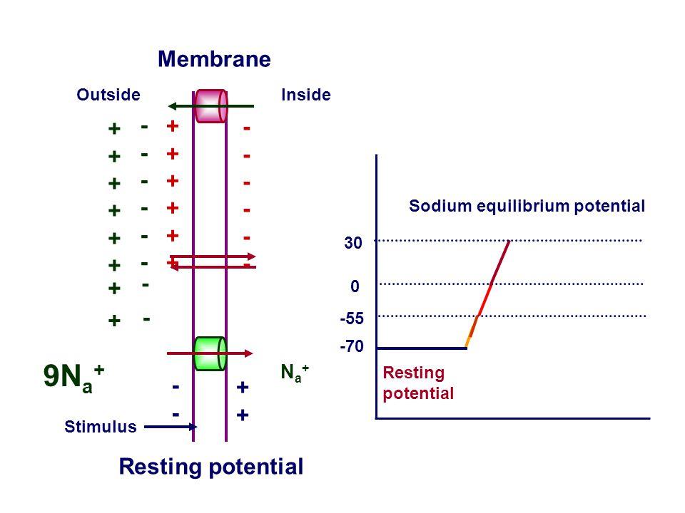 9Na+ Membrane ++++++ ------ ++++++ ------ - + + - -- ++
