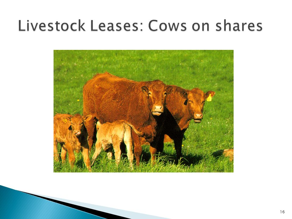 Livestock Leases: Cows on shares