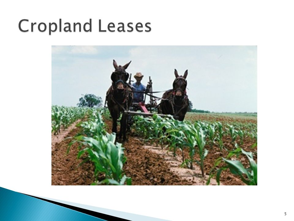 Cropland Leases