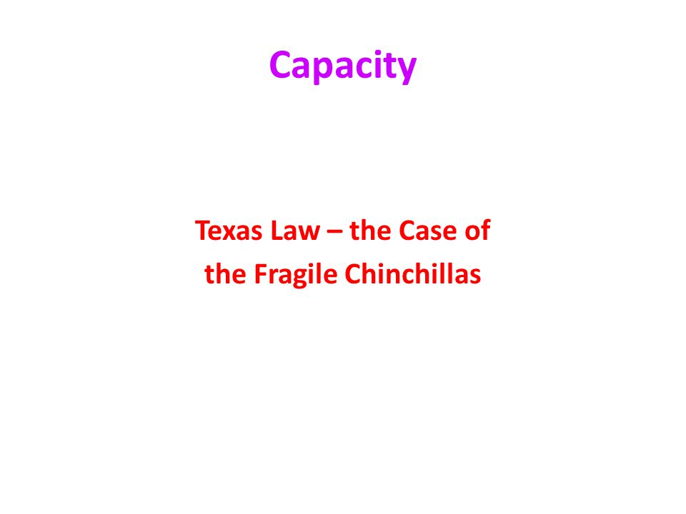 the Fragile Chinchillas