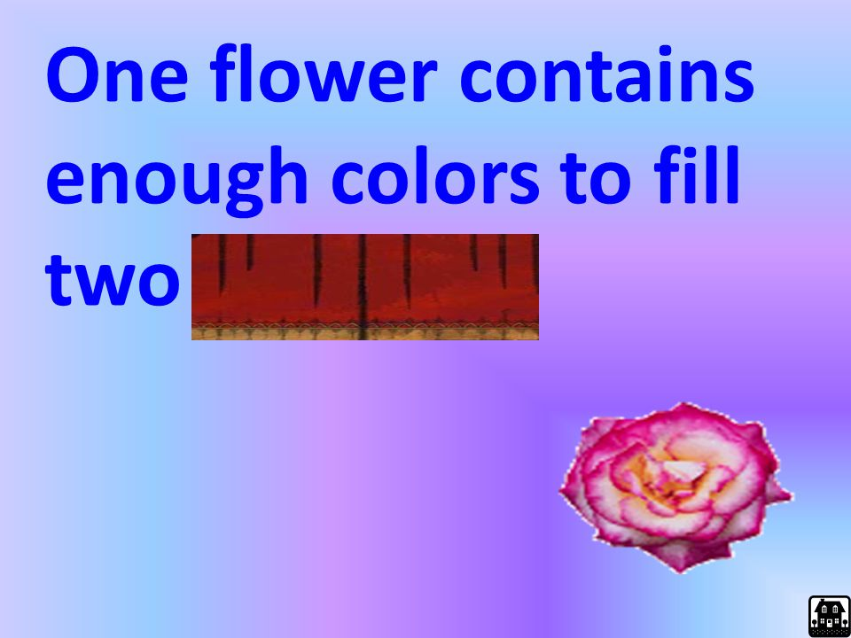 One flower contains enough colors to fill two palettes.