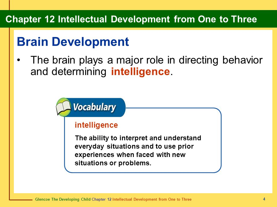 Brain Development The brain plays a major role in directing behavior and determining intelligence. intelligence.