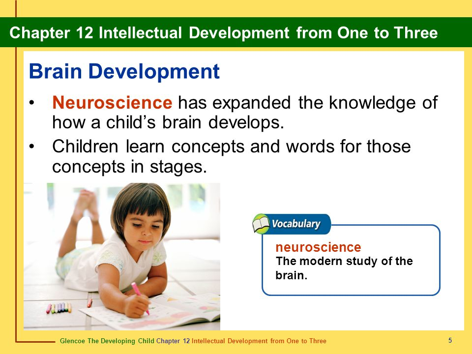 Brain Development Neuroscience has expanded the knowledge of how a child's brain develops.