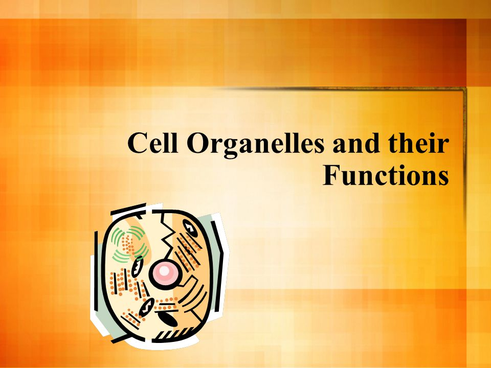 Cell Organelles and their Functions