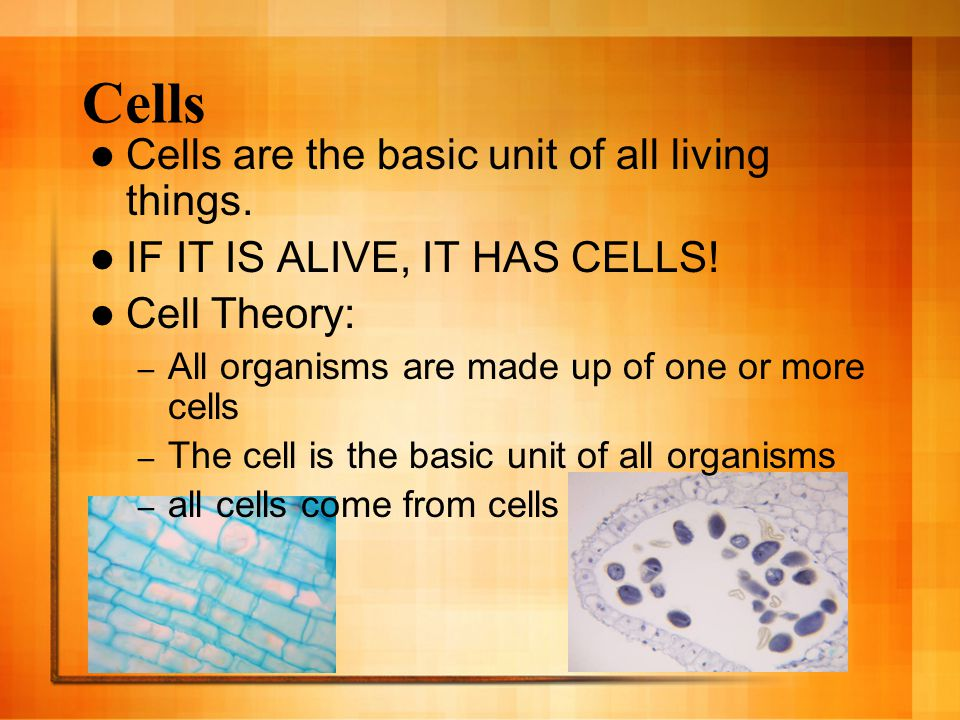Cells Cells are the basic unit of all living things.