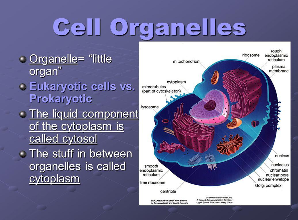 Cell Organelles Organelle= little organ