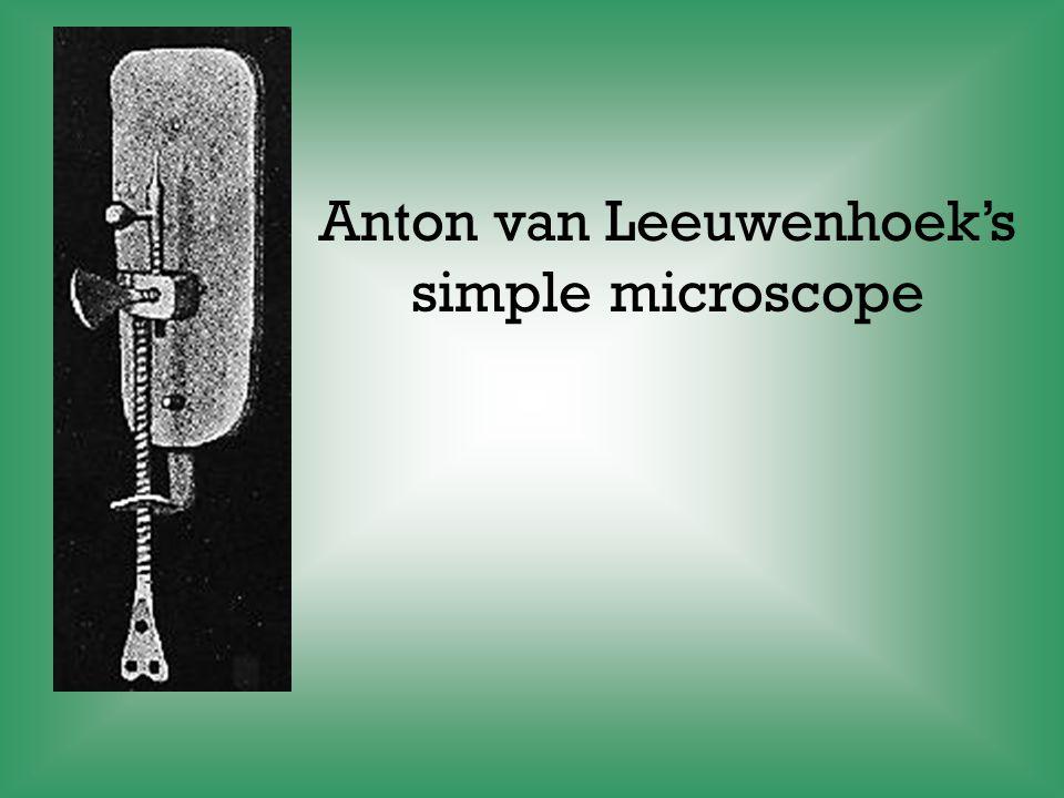 Anton van Leeuwenhoek's
