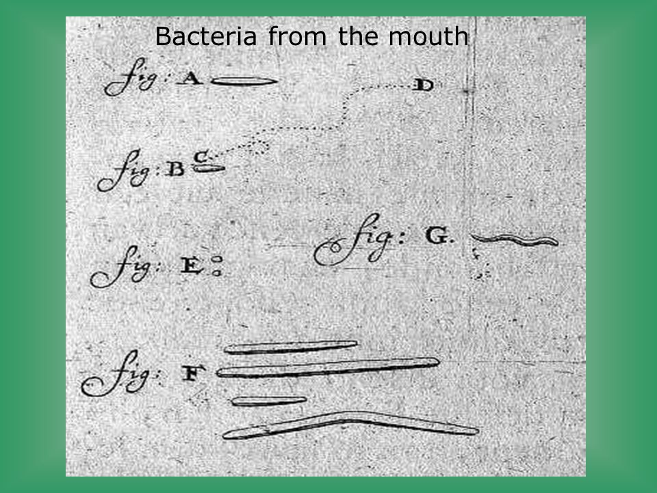 Bacteria from the mouth