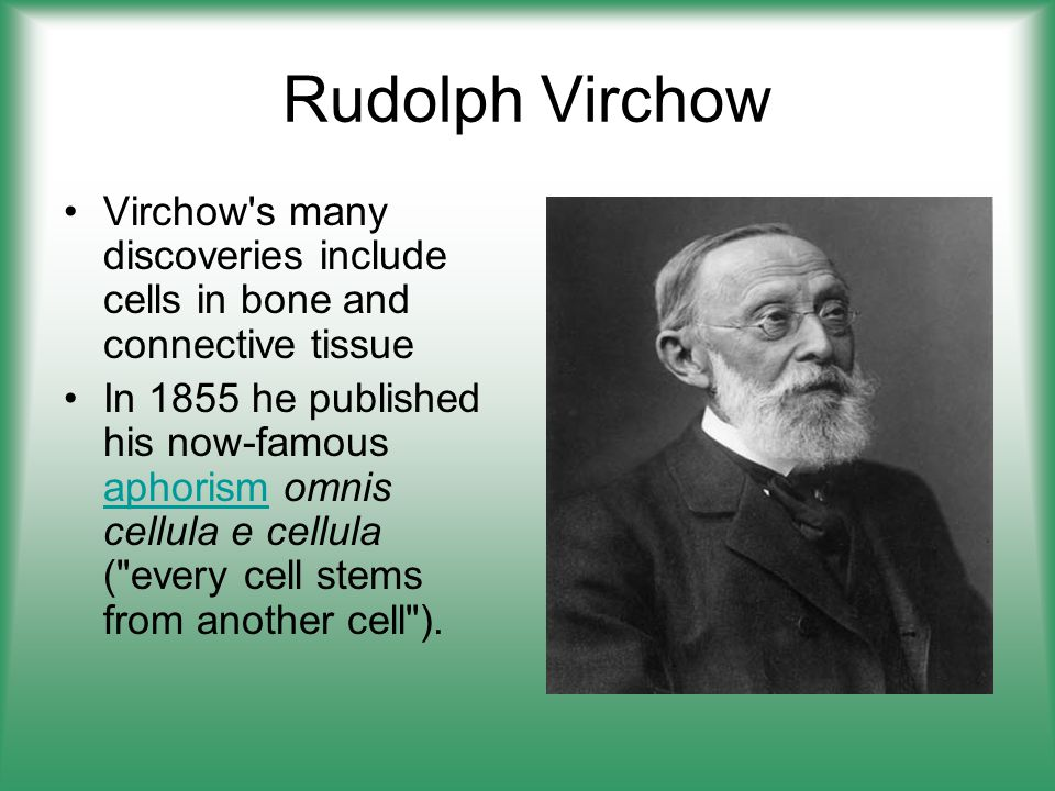 Rudolph Virchow Virchow s many discoveries include cells in bone and connective tissue.