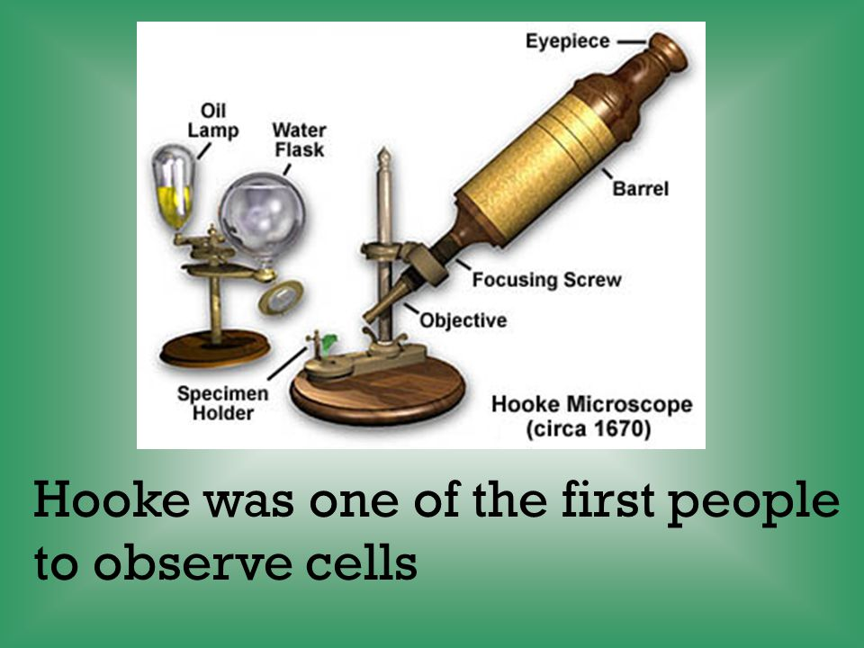 Hooke was one of the first people