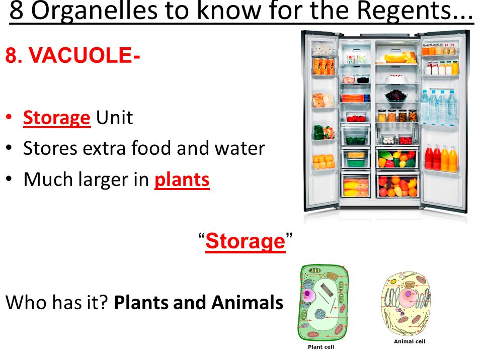 8 Organelles to know for the Regents...