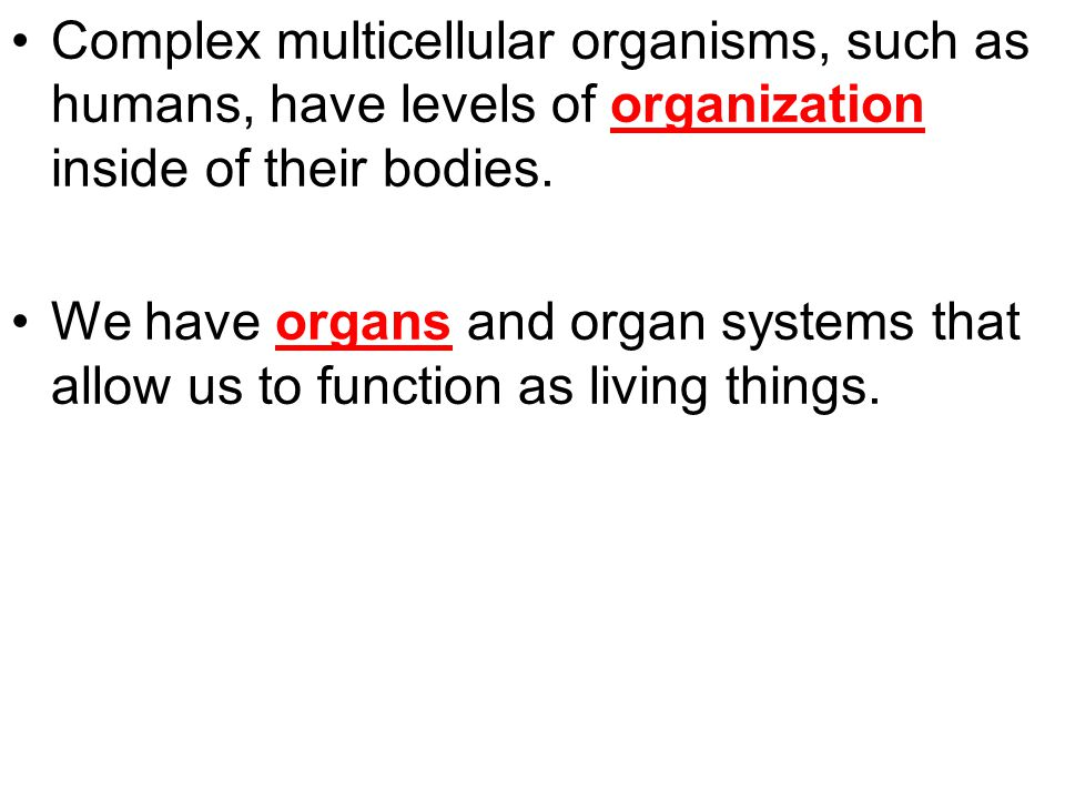 Complex multicellular organisms, such as humans, have levels of organization inside of their bodies.