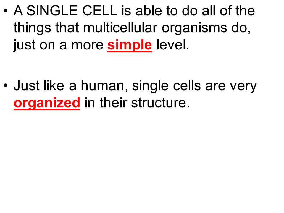 A SINGLE CELL is able to do all of the things that multicellular organisms do, just on a more simple level.