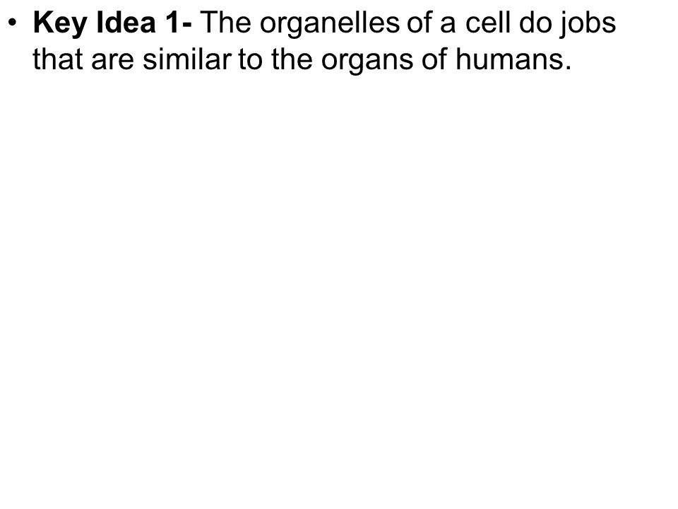 Key Idea 1- The organelles of a cell do jobs that are similar to the organs of humans.