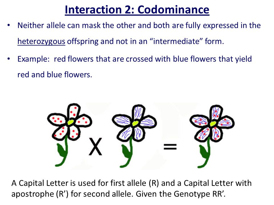 Interaction 2: Codominance