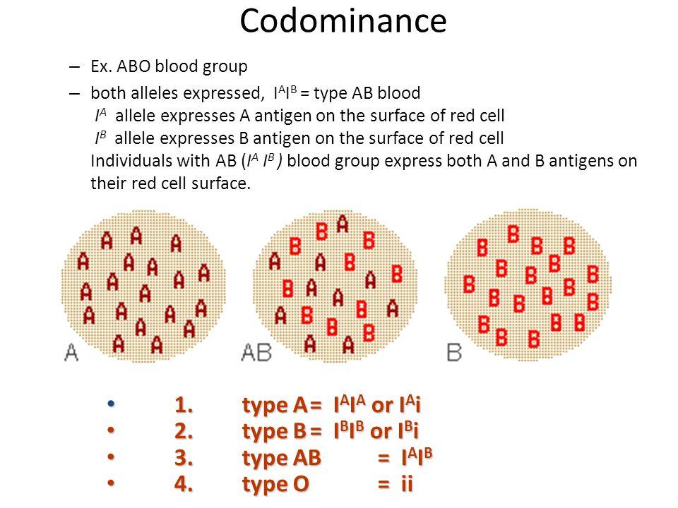 Codominance 1. type A = IAIA or IAi 2. type B = IBIB or IBi