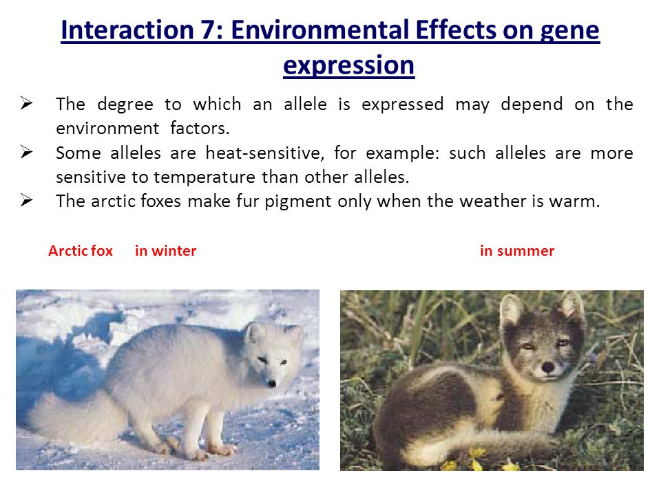 Interaction 7: Environmental Effects on gene expression