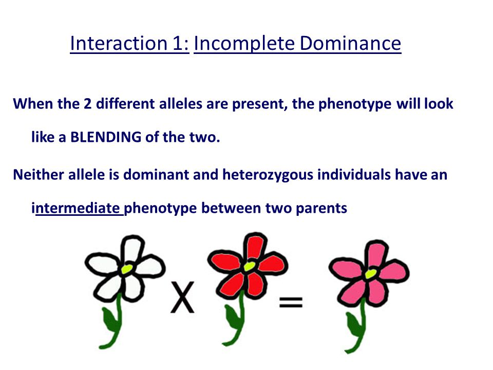 Interaction 1: Incomplete Dominance
