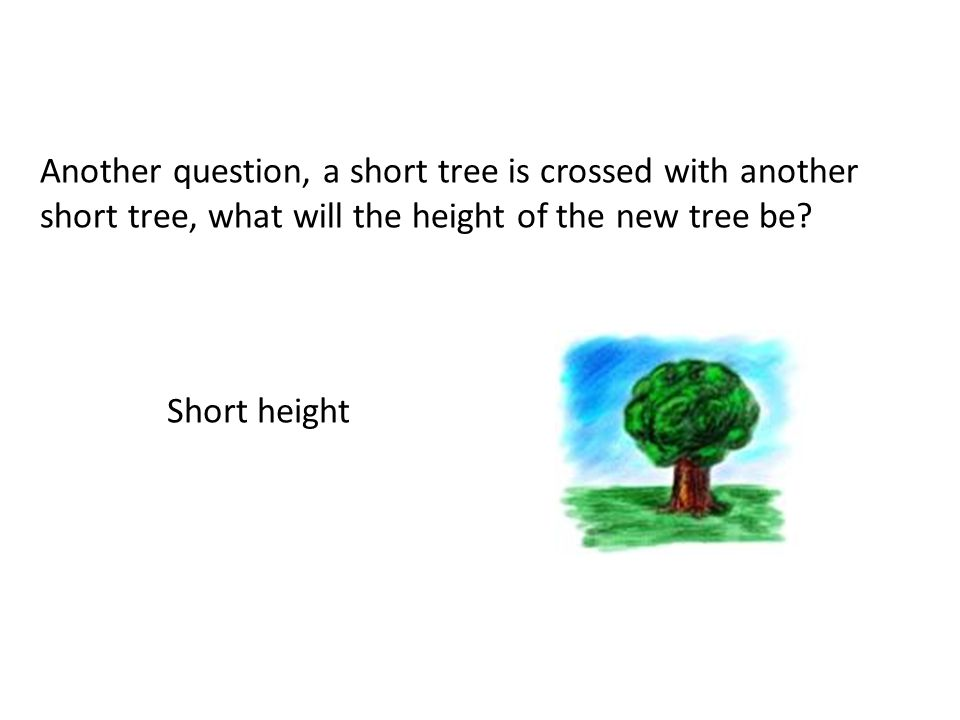 Another question, a short tree is crossed with another short tree, what will the height of the new tree be