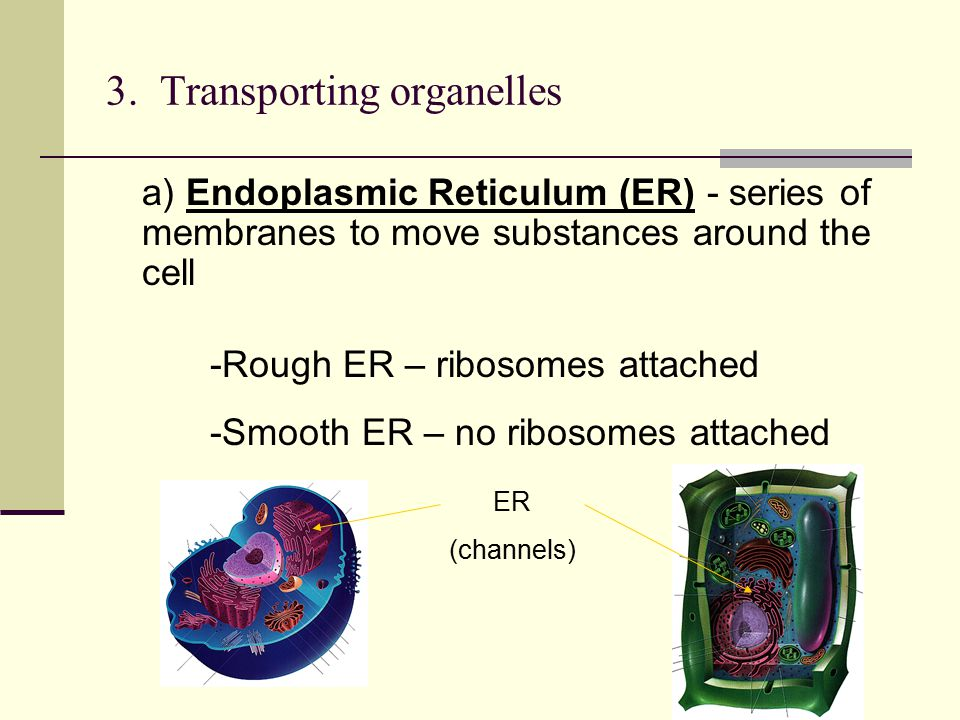 3. Transporting organelles