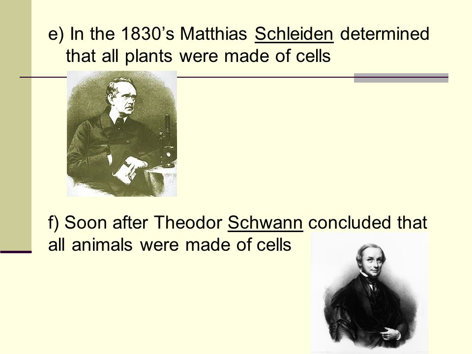 e) In the 1830's Matthias Schleiden determined that all plants were made of cells