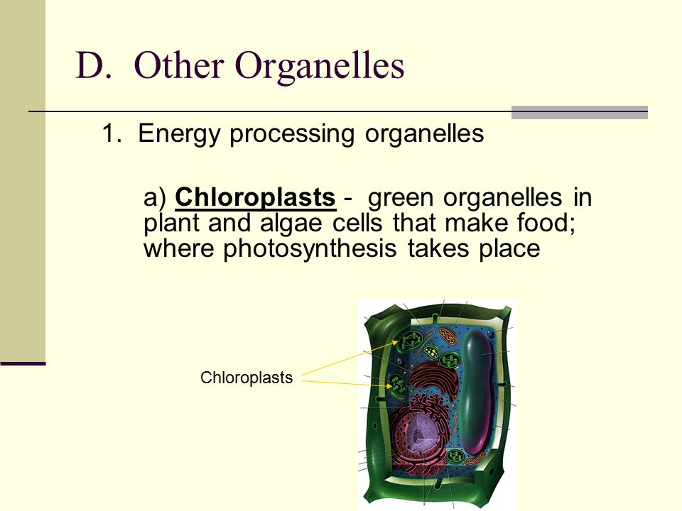 D. Other Organelles 1. Energy processing organelles.